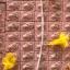 สีผึ้งหนูดูดนมแมว สร้าง 999 ตลับ หลวงปู่ถ้า อนาลโย thumbnail 14